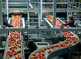Inside an apple packing and sorting line at the Allan Brothers warehouse northwest of Yakima, Washington.