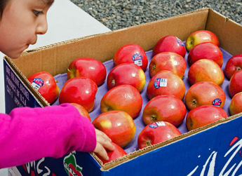 First picks on a packed box of Enza Jazz™ apples for Allan Bros. employees.