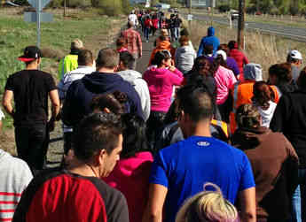 Waves of employees are released to run in the Allan Bros. 5K run outside of Yakima, WA.