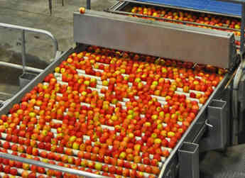 Packing apples requires a warehouse full of specialty equipment, trained employees, and constant monitoring.