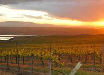 Sagemoor's Dionysus Vineyard commands spectacular views over wine grape plantings in the Columbia River Basin area of Central Washington.