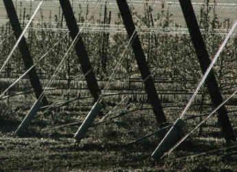 Frost control requires careful planning and execution for Washington State wine grape suppliers such as Sagemoor Vineyards.
