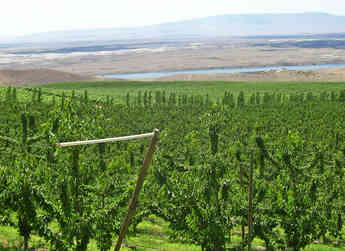 About Yakima Valley Orchards
